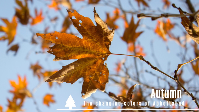 Autumn: The changing colors of Abbottabad
